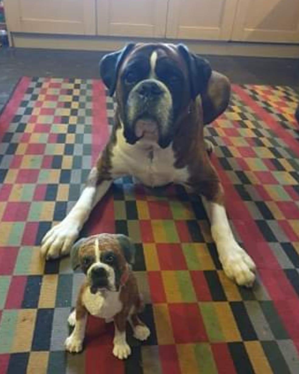 dog-commission-angus