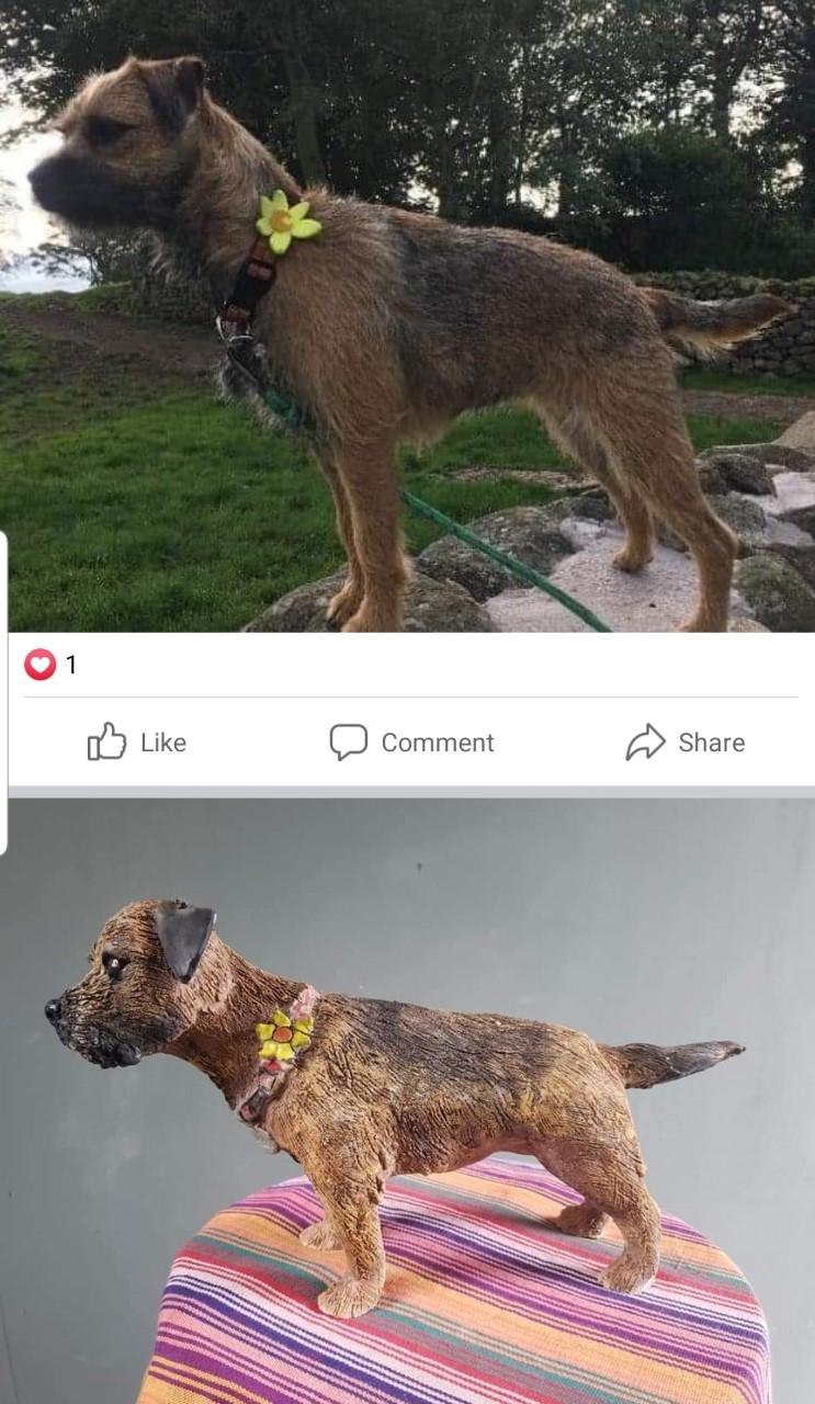 luna-border-terrier